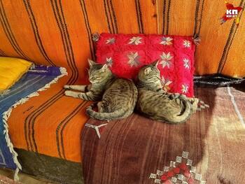 Эс-Сувейра стала кошачьей столицей Марокко