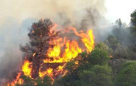 В Каталонии из-за аномальной жары начались лесные пожары